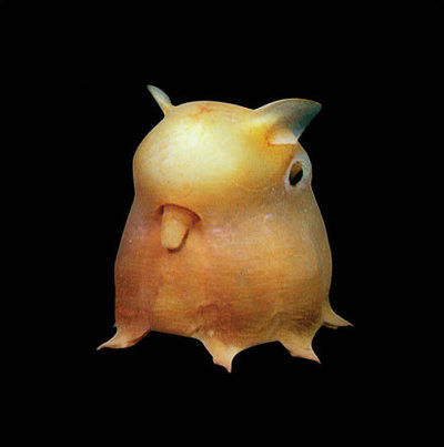Deep sea creature of the day! Looks like a pokemon.