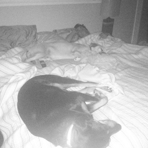 Absolutely no space on bed for me 😒😩😴👨🐶🐶#boys #mansbestfriend #noroom #bedtime