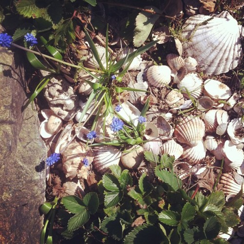 #garden #shells #strawberry #green