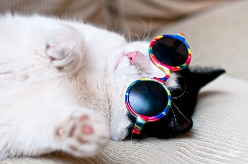 fuckyeahcuteanimalss:  (via Cool cat.)  Mew.