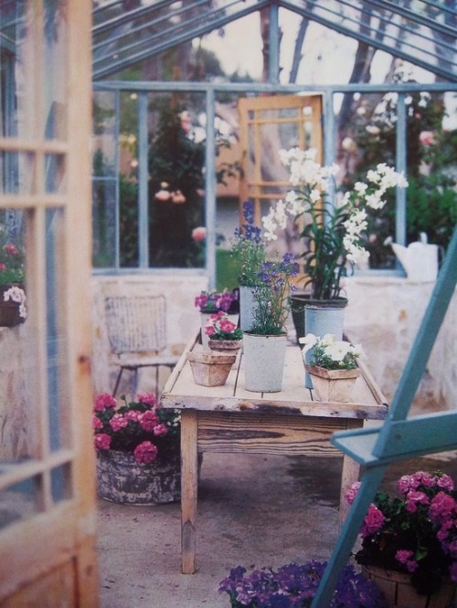 firsthome:  one day i will have a greenhouse and i will spend as much time in it as possible