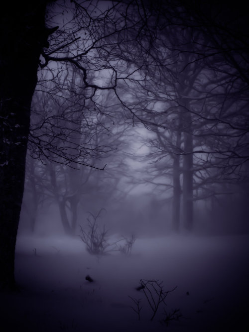 opticoverload:  Beautiful Winter