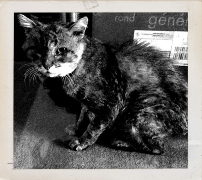 Je suis un chat.  R.I.P. Mr. Gaston  (1994-2012)  © Chill O.