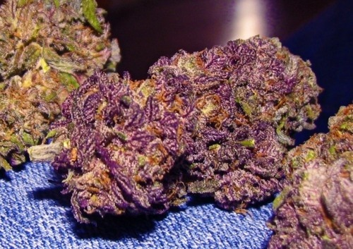marijuana-media:  Grapes