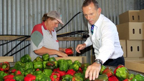"abbottoirblues:  ""These apples look terrible,"" thought Mr. Abbott."