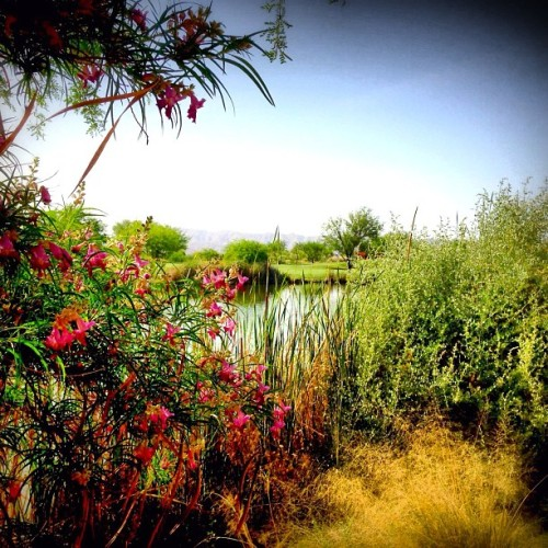 #Spring #desert landscaping at #Sheraton Wild Horse Pass Resort & Spa