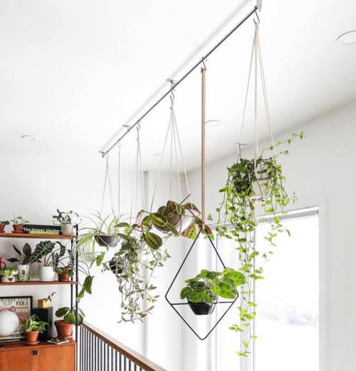 urban jungle indoor jungle house plants plants indoor plants greenery interiors interior design home inspiration