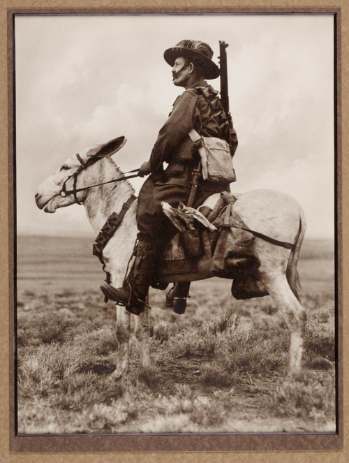 An Australian Light Horseman in Palestine. This photograph was taken during the Sinai and Palestine Campaign (1915-1918).