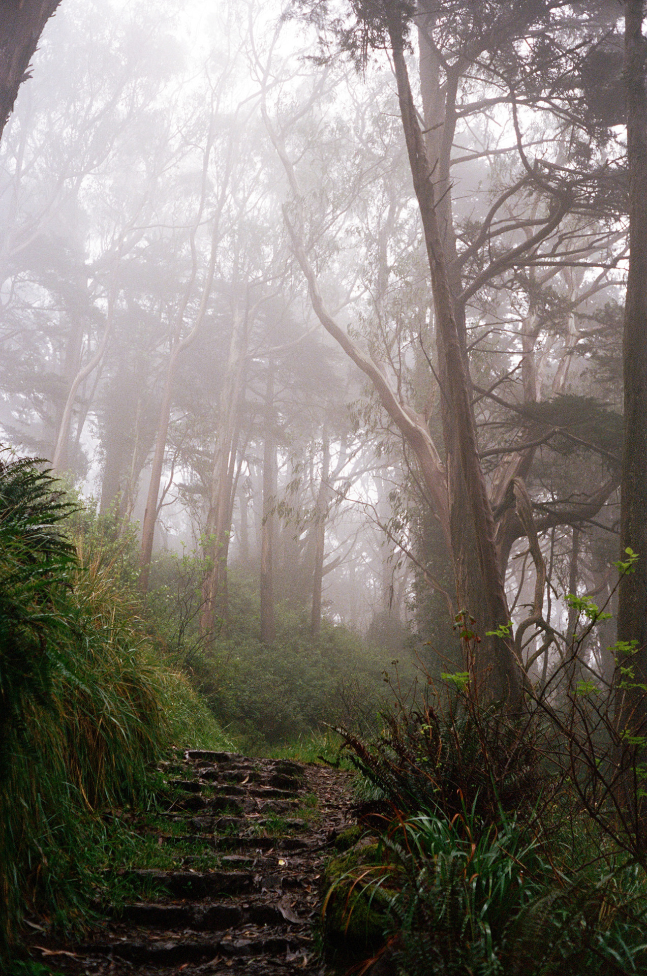 noarchitect:  Mt. Davidson San Francisco, 2012 ..