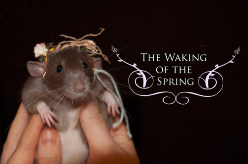 "Taika also wanted to promote my new single ""The Waking of the Spring"" XD. Taika también quería promocionar mi nuevo singleTaika says: ""Mummy, you're an ego! :/ I wanted to be at the cover of the new song, I'm way cuter than you with my flower garland""By the way you can listen to ""The Waking of the Spring"" song  here http://priscillahernandez.com/song/the-waking-of-the-spring"