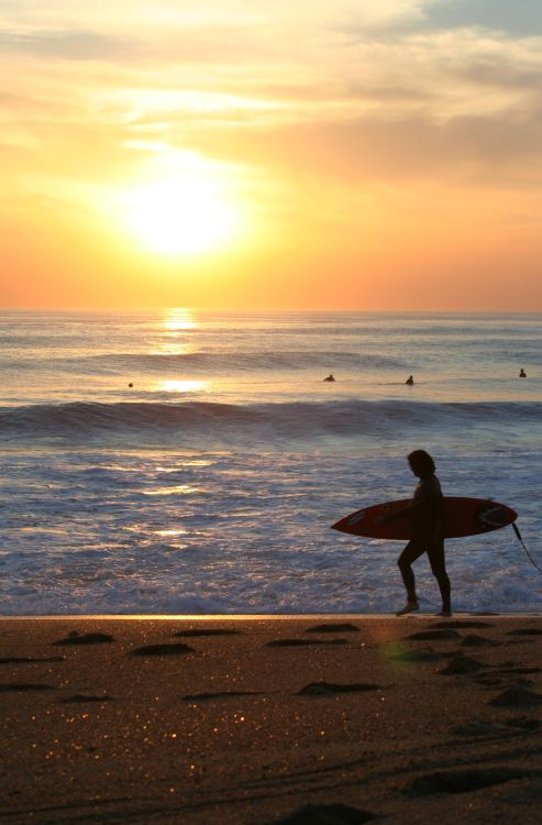 localfucker:  Surfer walking at sunset.
