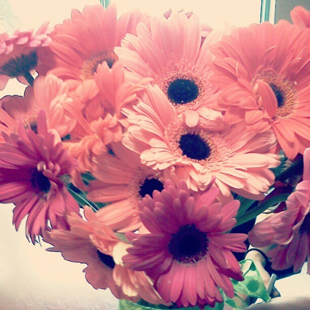 Ask for Gerber daisies…in every shade of pink! #flowergirl #flower #flowers #flowerpower #health #beauty #beautiful #beautifully_fit