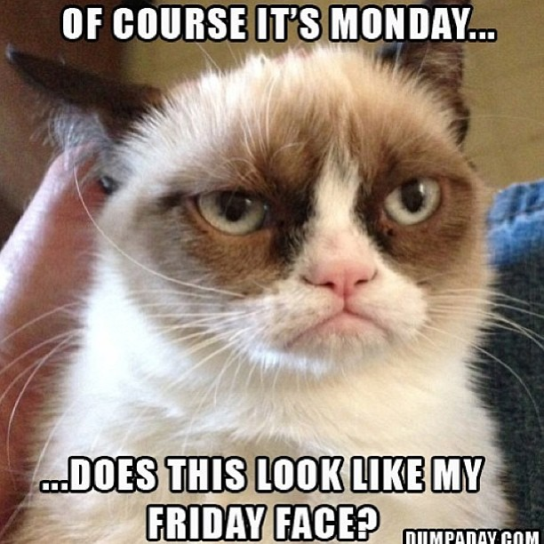 We love #GrumpyCat 😍😍😍 HAPPY MONDAY EVERYONE!  Remember there is still time to get your items before Memorial Day Weekend 💗 #SHOP www.ishine365.com #ishine365 🌟🌟🌟