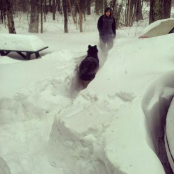 Molly and Tim in the driveway #nemo #blizzardNemo #GSD