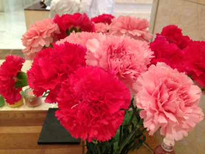Carnations such pretty flowers ❤