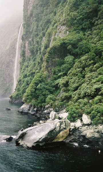 vacants:  A rainy day on Milford Sound (by traceyjohns)