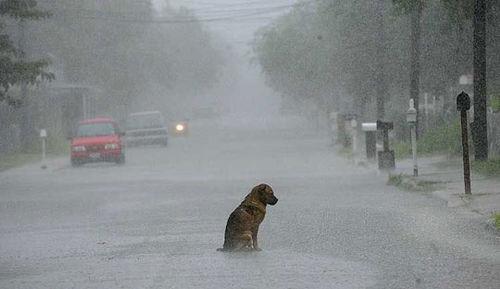 Humor funny sad dog street rain