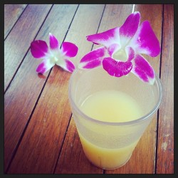 #pineapplejuice #rum #pineapple #orchids #hawaii #drinks #amazing #paradise #tropics #idontwanttoleave #ighawaii #ignation #instafamous #instagood #vacation #flowers #yum