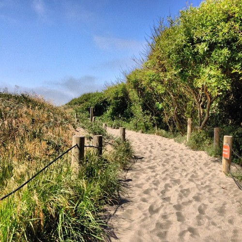 Path to Muir Beach #ilovenorthernCA #california #beach #roadtrip #travel