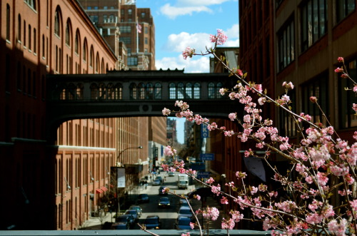 The first signs of spring blossoming at The High Line. Photo taken this past weekend in New York City.
