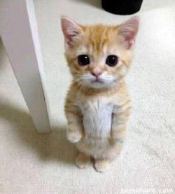 a little standing cat…. AHHHH