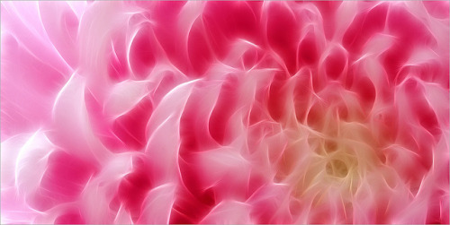 Pink Peony Macro - Fractalius by Bahman Farzad on Flickr.