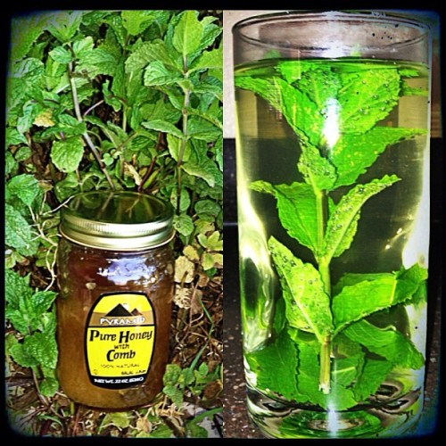 The only thing that seems to work, when you have a sore throat/fever! Herbs! 🍃🌿👌👍 I hate being sick, especially during school!:/😒😒👎 #egyptian #egyptianstyle #backtotheroots #myroots #Pharaohs #pharaoh #pyramids #mintandhoney #honey #mint #sorethroat #sick #halls #fever #theonlysolution #arab #arabic #arabproblems #photograph #photographer  #herbs #herbon #sweetsour