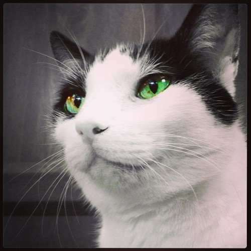 Beautiful Bobby green eyes 💚😻💚.