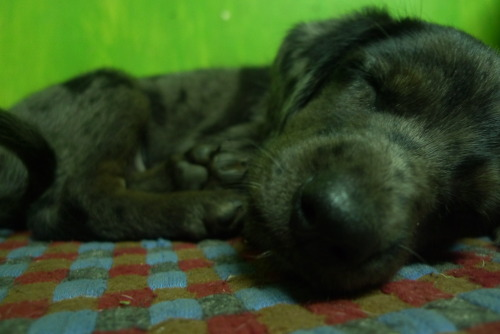 Hello sleeping puppy friend. His name is Batiktik since his mother is named Batik. Mine mother's name was Snoopy. Mine name has no logic.