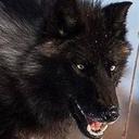 thewolf-besideyou