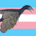 sinistropteryx