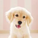 puppy-aesthetic