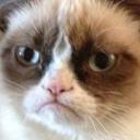 kittens4--sell-blog