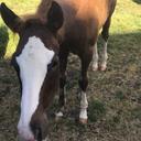 the-potted-pony-prancer-blog