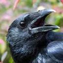 birdblogwhichisforbirds
