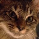 catfishwizard-blog