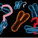 whychromosomes-blog
