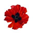 redpoppypress-blog