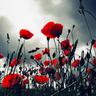 1000-lives-of-poppy