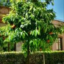 growingrosemary