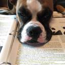 doggiedaycareconfessions
