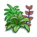 magnoliidae