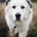 a-hound-dog