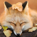 foxpost-generator
