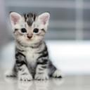 upsidedown-cats