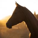 karideshorses