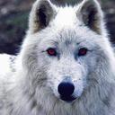 rokkrwolf