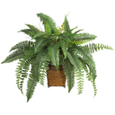 leafgirlinabox
