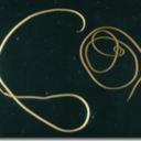 spinochordodes-tellinii-bis-blog