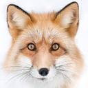 fox--paws